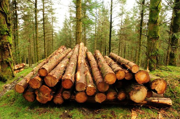 Forestry - Teagasc will host a series of clinics