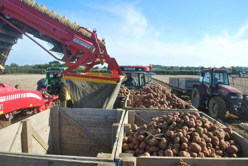 Harvesting potatoes on the Meade Potato Company farm in Co Meath