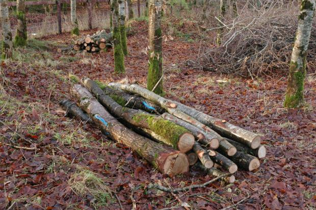 There must be a better use for hardwood thinnings