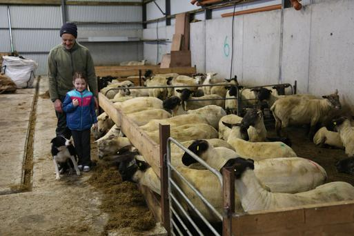 Michael Duffy, his daughter Aishling and dog Dora inspecting the housed ewes on the farm at Kerrykeel in north Donegal