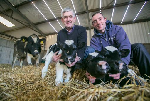 Shane Fitzgerald and his dad John with the triplet calves born on the family farm in Portlaw, Co Waterford. The dam delivered the calves - two bull and one heifer - herself and all are thriving says Shane. The chances of triplet calves surviving are