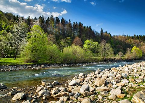 The Dasos initiative intends to develop a professional portfolio of up to 15,000 hectares of forests across Ireland. Stock image