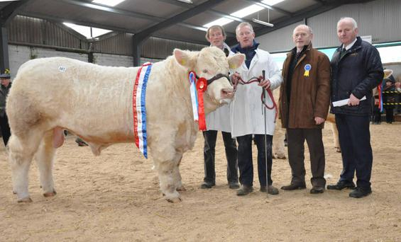 Crossmolina Marcus, Champion of Show at the Irish Charolais Society Show and Sale at Tullamore. Pictured with breeder Alan Wood, Crossmolina; Paul Fahy, handler; Paddy Farrelly, judge, and Kevin McGuire, president, Irish Charolais Society.
