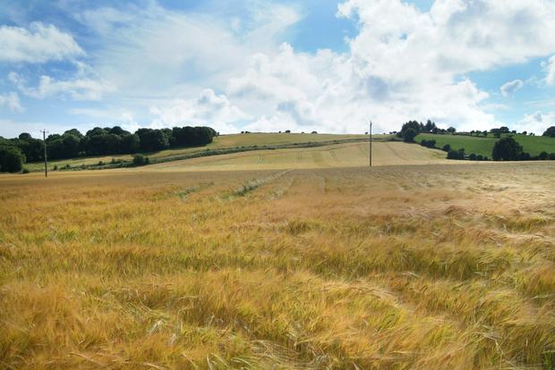 Lisselan comes with 315ac, 205ac of which is in tillage and grazing ground