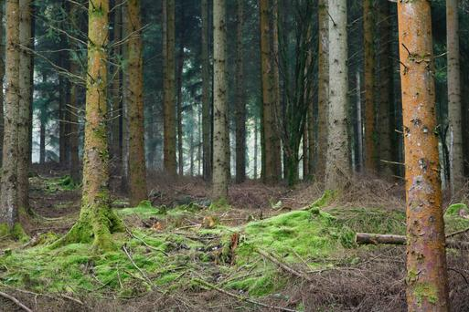 The floor price of forestry land is expected to rise