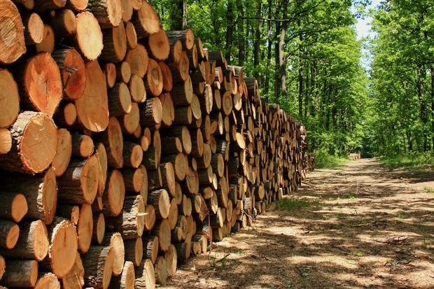 The Irish forestry industry is finally coming of age