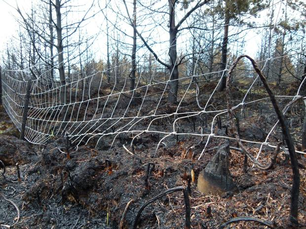 Wildfires can cause very severe damage to nearby forests