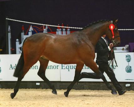 Ballycreen Rainbow Magic was crowned reserve supreme in the UK