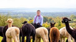Joe Phelan of the Irish Alpaca Association pictured with his flock in Hillside, Greystones, Co Wicklow