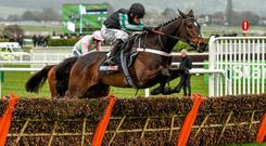 Altior - the odds-on favourite for today's Arkle Trophy at Cheltenham