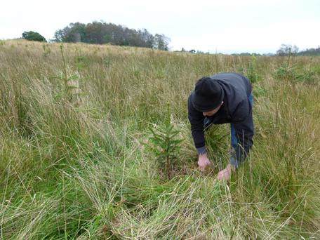 Good vegetation control is of critical importance in a young forest