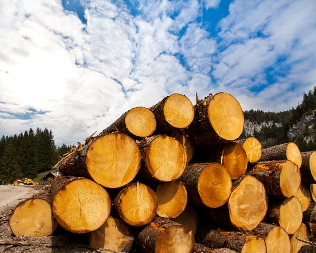 'Now the timber sector has new challenges in the face of competition from Scottish mills and, with Brexit, possible tariffs and longer wait times at entry points into the UK.' (stock pic)