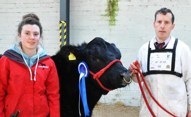 Michelle Farrell and John Farrell, President, Irish Angus Catttle Society with their prizewinning bull, Dillon Mac at the Irish Angus Cattle Society Show and Sale at Tullamore.