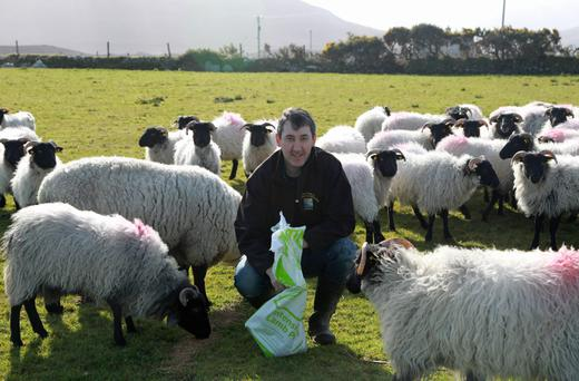 Seanie Boyle on the family farm in Co Donegal. Photo: Donna McBride