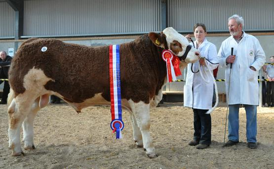 Jennifer and Seamus Ahern, Cappamore, Co Limerick with Male Champion of the Show, Rubyjen Harrys Fox sold for €6,600 the top price at the sale.