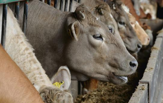 'South Africa is the largest animal-feed producer on the continent, and there's an ongoing opportunity to supply supplements to feed manufacturers, although this will mean taking market share from existing players.' (stock photo)