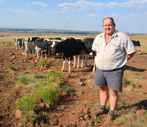 Anthony Khourie examines the springing heifers at Bospardys Farm near Pretoria.
