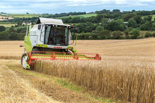 Grain farmers are facing into a fourth year of potential losses