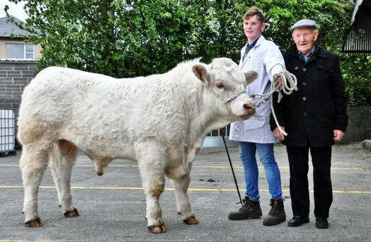 Niall Flynn and his grandfather, Paddy Flynn, with Tullyvillage Mathan, exhibited by Willie Flynn, Newbridge, Ballinasloe whch sold for the top price of €4,550 at the Charolais Society Show and Sale at Tuam Mart on Saturday.
