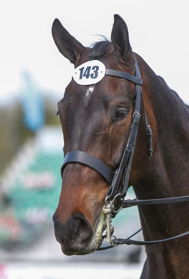 Champion four-year-old Queen Bee