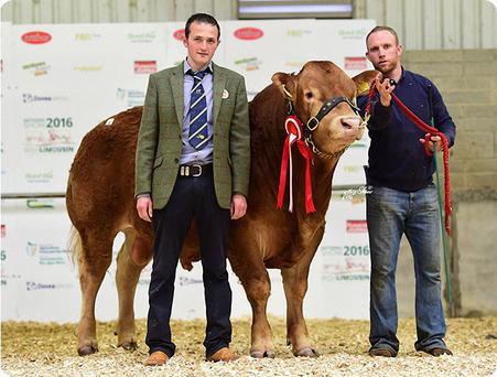 Alan and Paul Kelly with Kilcastle Lenn, which sold for €12,600 at the Limousin Show and Sale at Roscrea