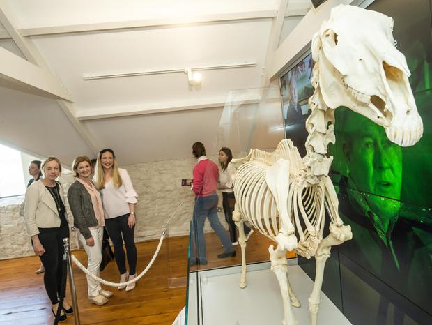 The skeleton of legendary stallion Sadler's Well is one of the main exhibits at the Fethard Horse Country Experience Museum