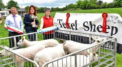 Stephen Lyons from sponsor Univet, Sinéad Brophy and Anne Murphy from the Irish Texel Sheep Society at the launch of the championship.