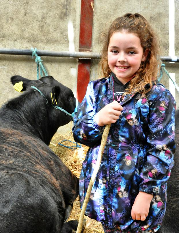 Eight-year-old Megan Reynolds, Drumhirk, Co Leitrim taking good care of her dad's Angus bull, Drumhirk Nipper.