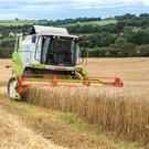 The outlook for Irish grain crops is extremely positive, as Carlow-based farm advisor Pat Minnock reported crops were
