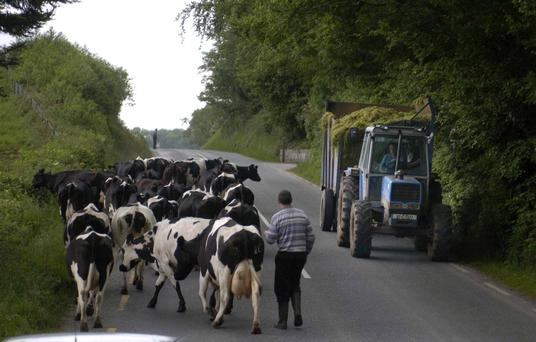 Is a farmer responsible for his cows on a public road?