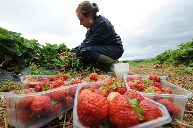 A drain on labour from the continent could rattle the production of food (PA)