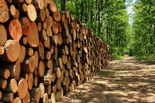 There are attractive incentives to plant forestry