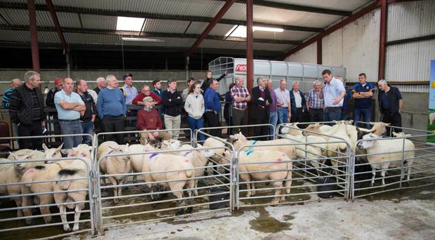Teagasc adviser Ciaran Lynch addressing members of the Longford Lamb Producer Group Photo: William Quain
