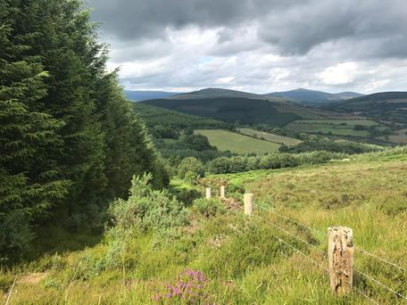 The plantation at Laragh, Glendalough, Co Wicklow - comprising 90pc Sitka Spruce - is valued at €280,000