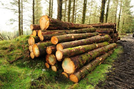 Timber sales at the end of a 33-year rotation should yield €7,000 to €9,000/ac at today's prices