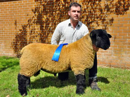 Philip Byrne, Limepark House, Windgap, Co Kilkenny with his ram lamb sold for €11,000 at the Suffolks Sheep Society Premier Show and Sale at Roscrea Mart on Saturday.