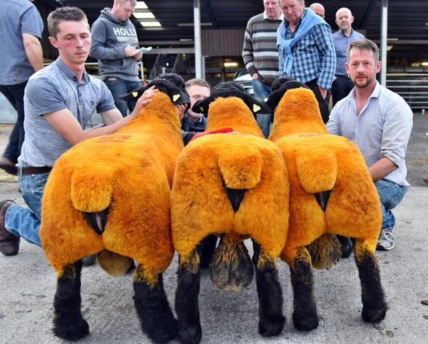 Andrew and Jonathan Lucas, Cavan House, Killygordon, Co Donegal, with the best group of three ram lambs at the Suffolk Sheep Society Show and Sale at Roscrea.