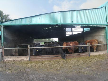 The outbuildings include housing for 45 cattle