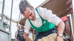 IFA President Joe Healy shows off his sheep shearing skills at the Agri Aware stand during the Tullamore Show. Picture: Pat Moore