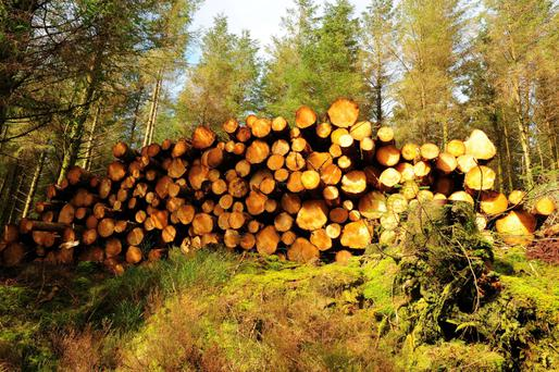The Teagasc Talking Timber events will address issues for plantation owners ahead of the harvesting season