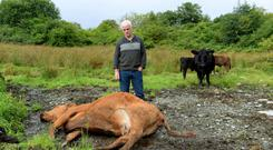 Farmer Martin Grant from Ballymagowan lost livestock to the floods. PHOTOS: Caroline Quinn