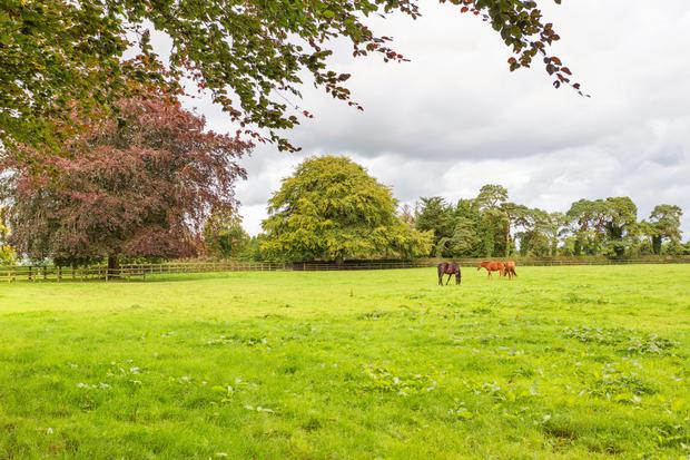 Horses grazing at Loughtown Stud