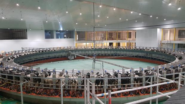 The 100-unit custom built Dairymaster milking parlour