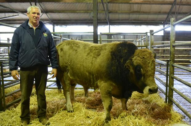 Francis Butler, Culvin Streete, Co Westmeath with his first prize winning registered pedigree bull at the Irish Aubrac Cattle Breed Society Show and Sale.