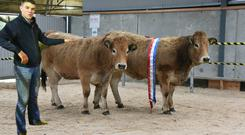 Evan Walsh, with the overall Reserve Champion and Champion at the Irish Aubrac Cattle Breed Society Show and Sale at Tullamore exhibited by his uncle, John Walsh, Rockhill, Ballintra, Co Donegal. They sold for a combined €6,000.