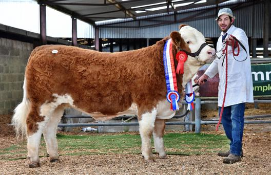 Garreth T Behan, Clonagowan, Ballyfin, Portlaoise, with the Champion Yearling Heifer, Clonagh Honey Eyes, sold for the top price of €12,100 at the Simmental Show and Sale at Roscommon on Saturday.