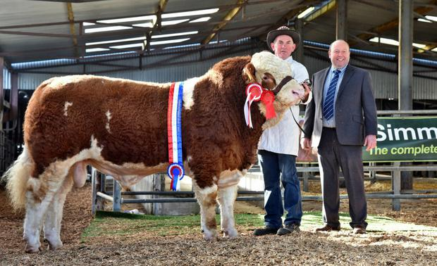 Peter O'Connell, Knopogue, Mallow with the Senior Bull Champion, Raceview Herman at the Irish Simmental Show and Sale and show judge, Ian Green, Scotland.