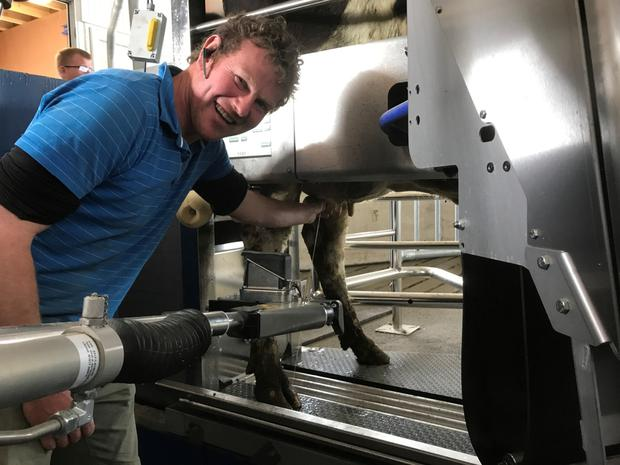 Martin Jnr working with the Robotic Milking System