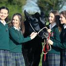Emily Browne, Tara Frehill, Shauna Jager and Eithne Murray from Our Lady's School, Terenure were announced as the national winners of the Certified Irish Angus Beef schools competition. The group reared five Irish Angus Cross calves for 18 months as part of an Agricultural Science schools competition