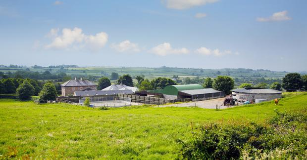 Longstone Stud is located on 52ac near Cullen, Co Tipperary. Pictures: Savills.